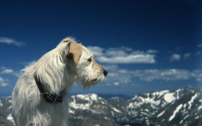Our dog Emerson with mountains in the background