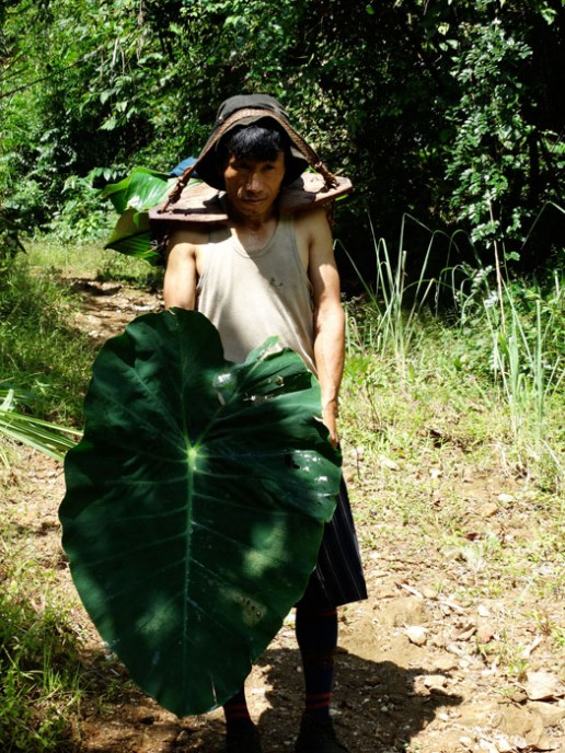 A mountain fisherman on our trail taking his catch (wrapped in Alocasia leaves) to the market in Putao.