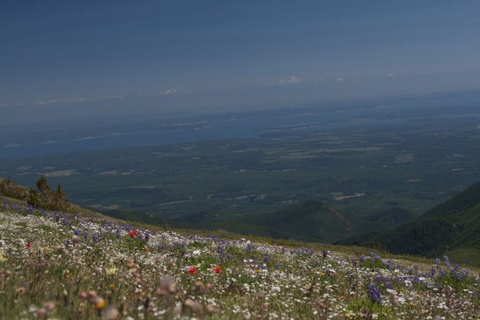A view to the Puget Sound from the floral-studded peak of Mt. Townsend in the Olympic Mountains.