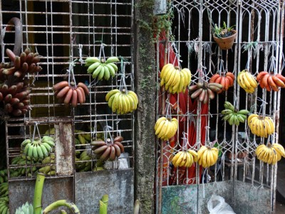 Banana varieties for sale on the streets of Yangoon.